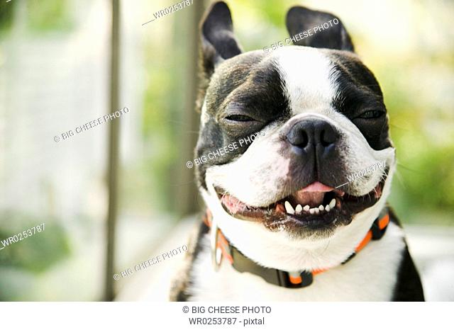 Closeup of a happy dog