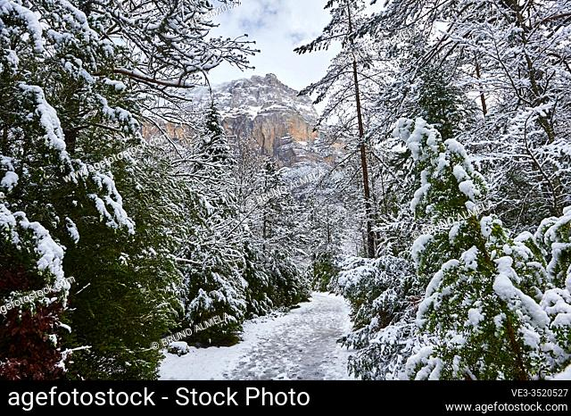 Pyrenees: Snowy path in the National park of Ordesa and Monte Perdido (Huesca province, Aragon region, Spain)