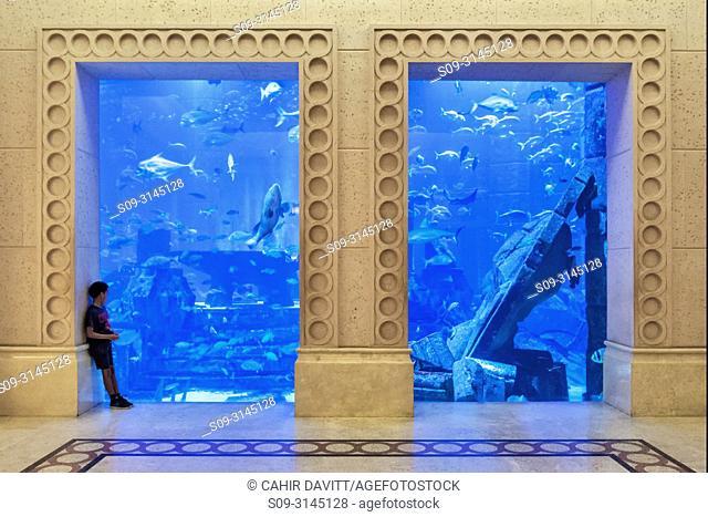 A small boy gazes into the aquarium of the Atlantis 5 star resort complex, Palm Jumeirah, Dubai, The United Arab Emirates