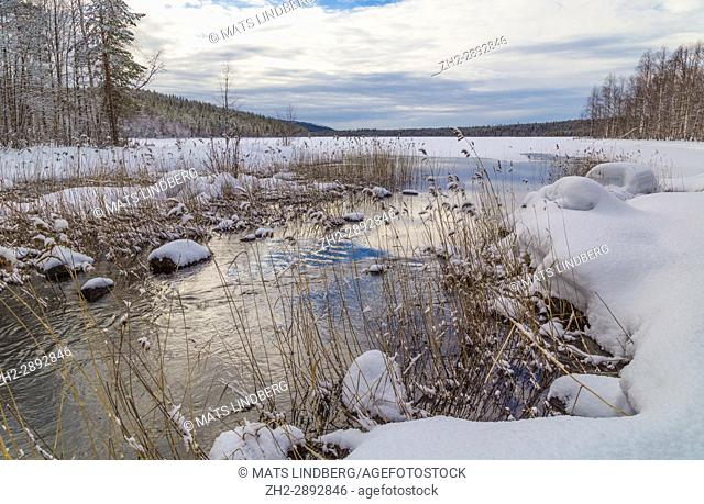 Creek with open water with ice and snow and the sky reflecting in the water, snow on the tree, Norrbotten, Sweden