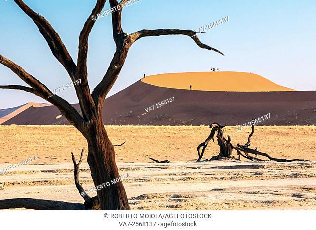 Dead Acacia surrounded by sandy dunes Deadvlei Sossusvlei Namib Desert Naukluft National Park Namibia Africa