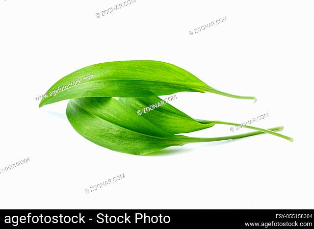 Green wild garlic leaves isolated on white background