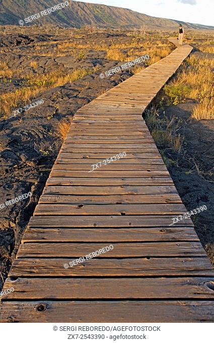 """Pu'u Loa Petroglyphs. Hawai'i Volcanoes National Park. Big Island. Hawaii. Pu`u Loa, translated as the """"""""long hill""""""""i or """"""""Hill-(of)-long-(life)""""""""ii from..."""