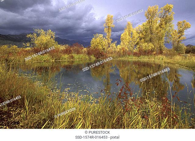 Peggy's Pond Jackson Hole Wyoming USA