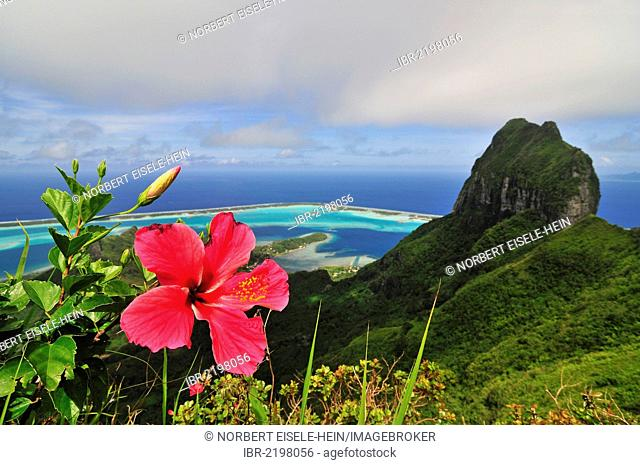 Hibiscus flower, view of the reef, atoll, Motu and Mount Otemanu from Mount Pahia, Bora Bora, Leeward Islands, Society Islands, French Polynesia, Pacific Ocean