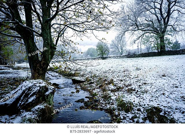 Rural landscape early morning snowy trees and River Wharfe, Buckden North Yorkshire, Yorkshire Dales, Skipton, England, UK