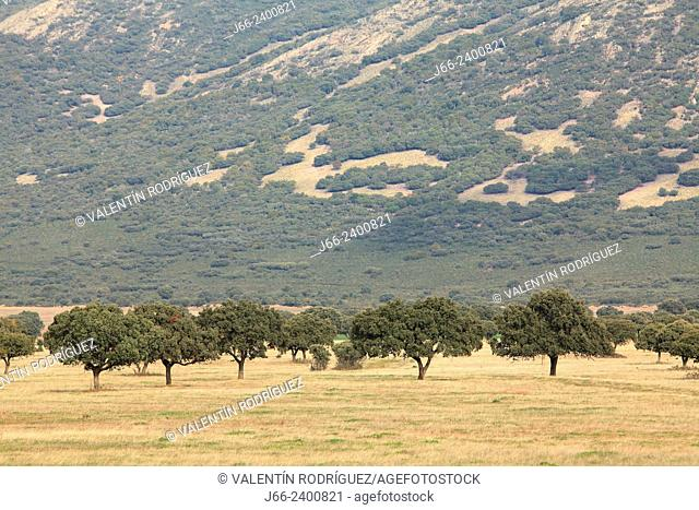 meadow (raña) landscape in the national park Cabañeros. Ciudad Real. Spain