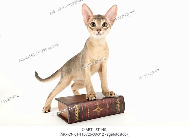 A kitten on a book