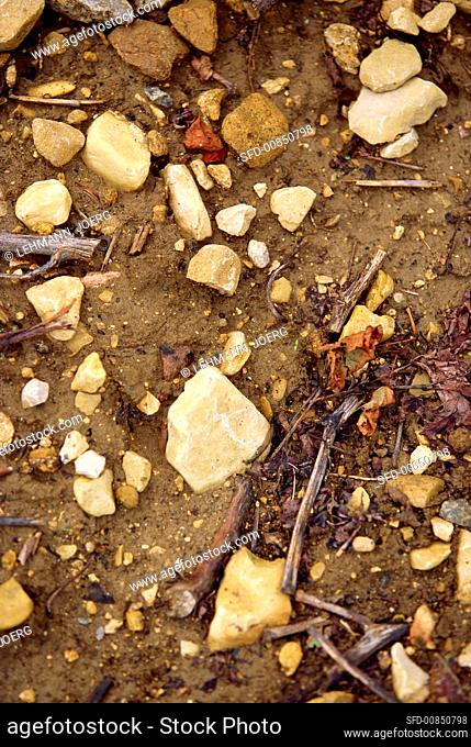 Typical limestone soil of a Burgundy vineyard