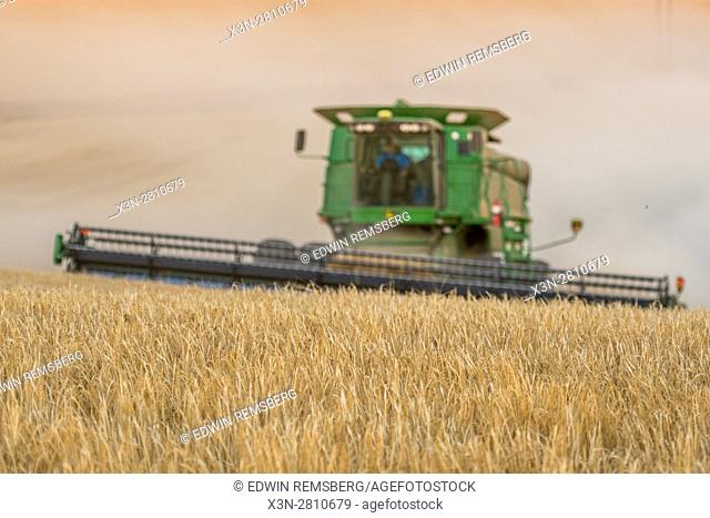 View of grains in a field about to be harvested in Reardan, Washington