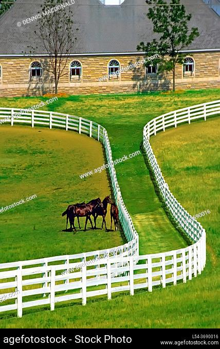 Horse farms at Lexington, Kentucky