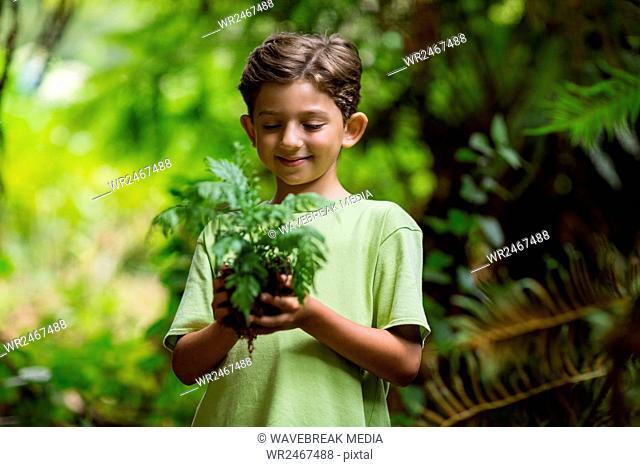 Boy holding sapling plant