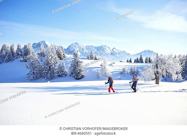 Snowshoeing, hiking in winter landscape, Simmering Alm, Obsteig, Mieming, Tyrol, Austria