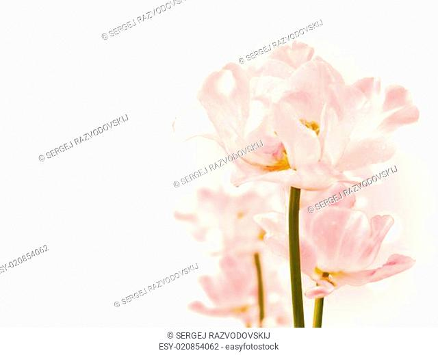 Purity Flowers
