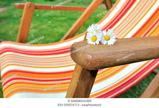 daisies placed on the armrest of a deckchair in the garden