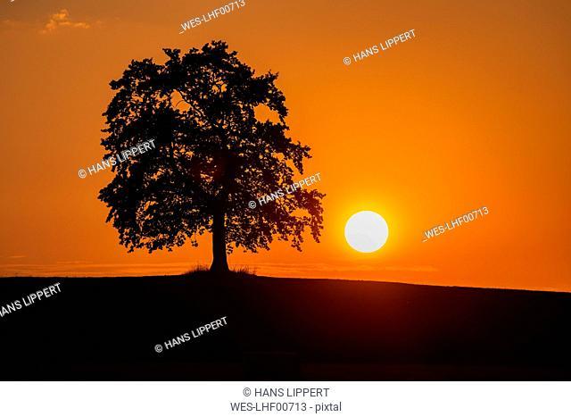 Silhouette oak tree on land against orange sky during sunset, Bavaria, Germany