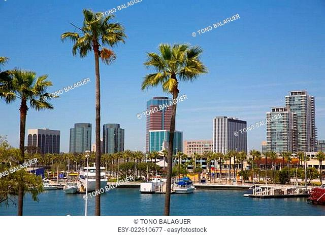 Long Beach California skyline from palm trees of port