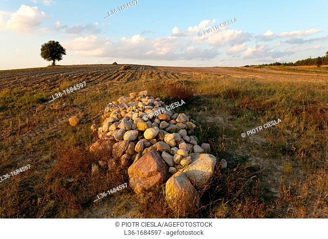 Rocks on a field  Podlasie region  Poland