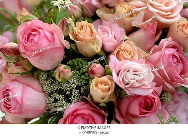 Pink-coloured bunch of roses