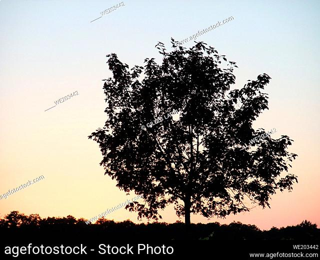 Tree silhouetted by sunset sky