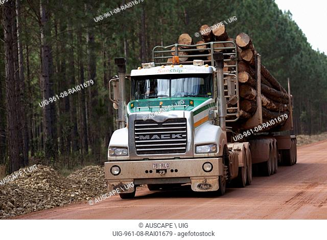 Logged pines being transported along a forestry road. Toolara State Forest, Sunshine Coast, Queensland, Australia. (Photo by: Auscape/UIG)