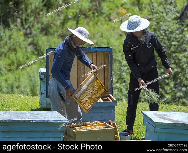 Beekeepers near the mountain road from Jalal-Abad (Dzhalal-Abad, Djalal-Abat, Jalalabat) to mountain pass Urum Basch Ashuusu in the Tien Shan mountains or...
