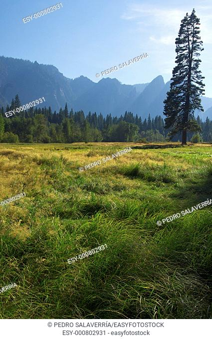 meadow and tree in Yosemite National Park, USA