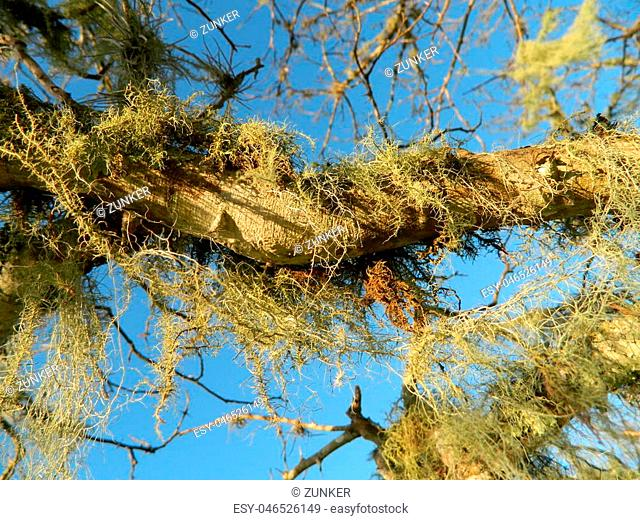 Epiphytes in nature