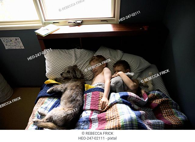 Dog and brothers sleeping a row bed