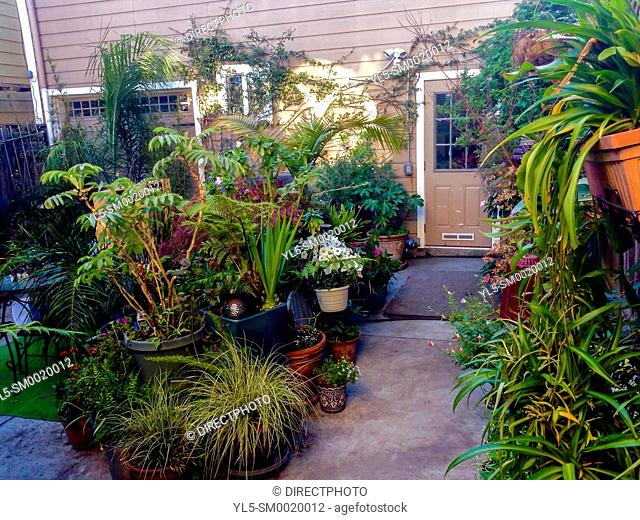 San Francisco, CA, USA, Private Garden in Air BNB Townhouse Tourist Rental