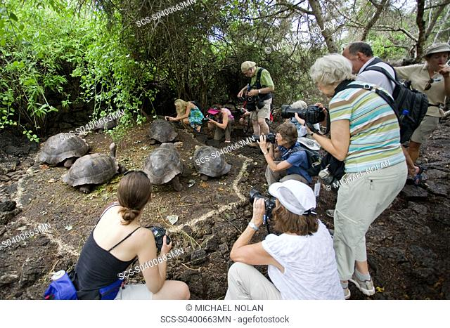 Photographers with captive Galapagos giant tortoise Geochelone elephantopus being fed at the Charles Darwin Research Station on Santa Cruz Island in the...
