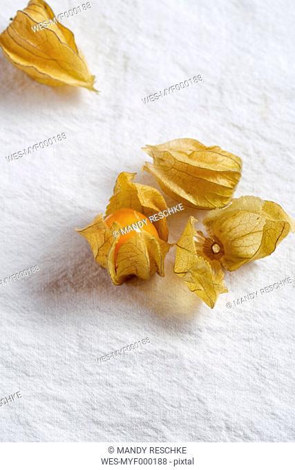 Physalis fruits (Physalis peruviana), close up