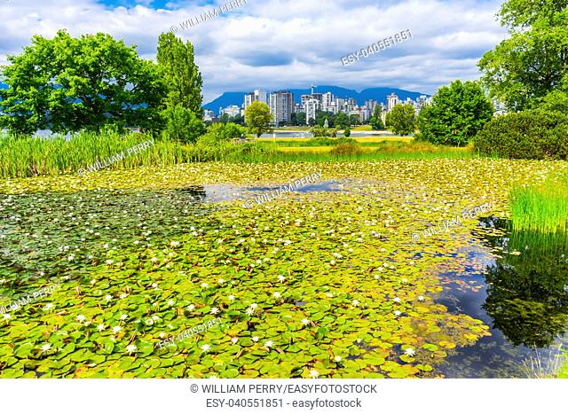 White Lily Pond Skyline Vanier Park Vancouver British Columbia Canada Pacific Northwest