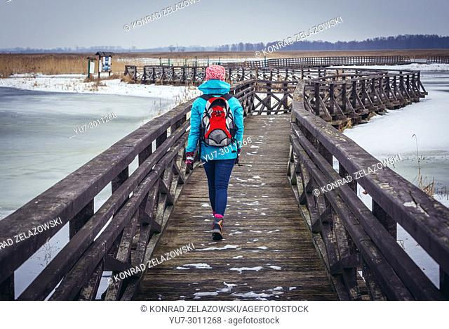 Tourist on wooden footbridge over braided channels of Narew River in Waniewo village, part of Narew National Park in Podlaskie Voivodeship of Poland