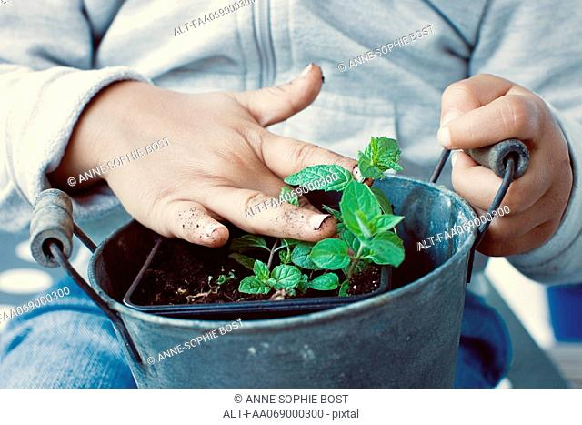 Child touching soil of mint plant, mid section