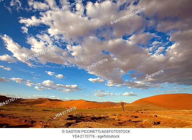 Ses Riem in rainy season, Namib-Naukluft National Park, Namib desert, Namibia