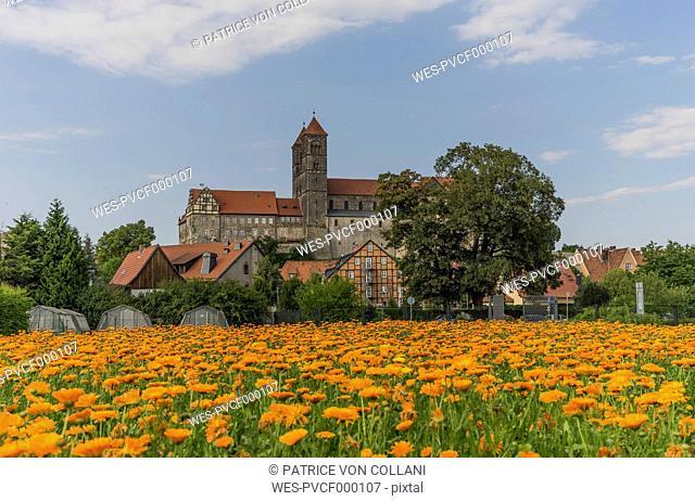 Germany, Saxony-Anhalt, Quedlinburg, Quedlinburg Abbey, St. Servatius church, Garden with flowers