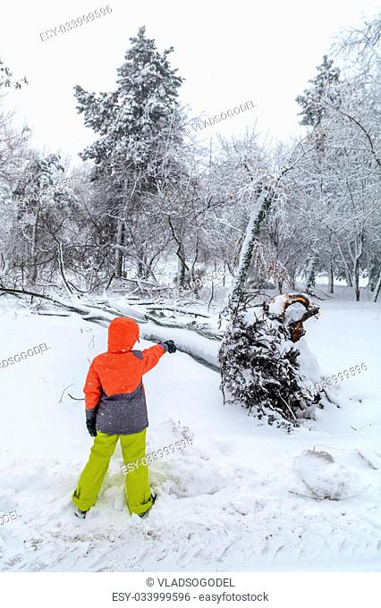 Broke down tree on the severity of fallen snow. Child pointing over the root of a fallen tree in the park in winter