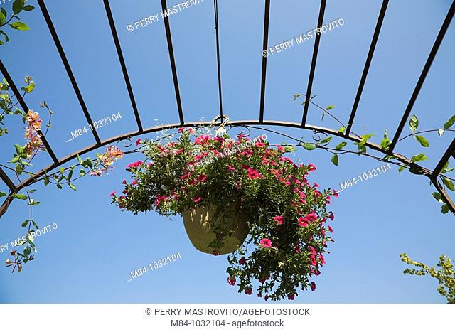 Flowerpot with Petunias suspended from a Cast Iron Archway in a Backyard Garden, Laval, Quebec