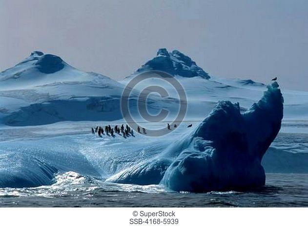 ANTARCTICA, SOUTH ORKNEY ISLANDS, CHINSTRAP PENGUINS ON ICEBERG