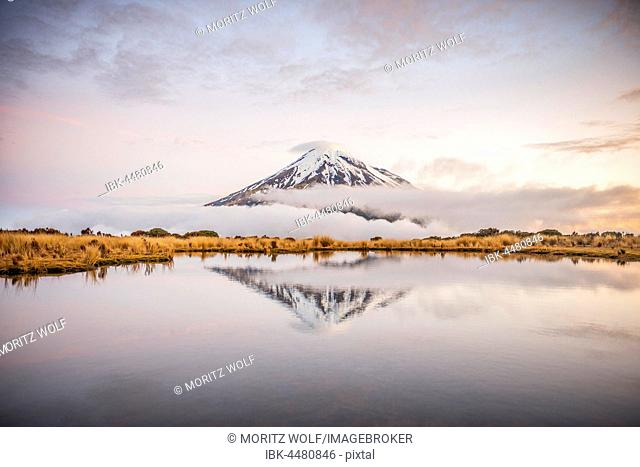 Reflection in Pouakai Tarn, stratovolcano Mount Taranaki or Mount Egmont at dusk, Egmont National Park, Taranaki, North Island, New Zealand