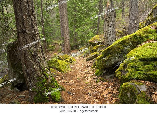 Badger Creek Trail, Badger Creek Wilderness, Mt Hood National Forest, Oregon