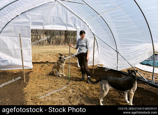 A young female farmer working in green house in the morning in spring