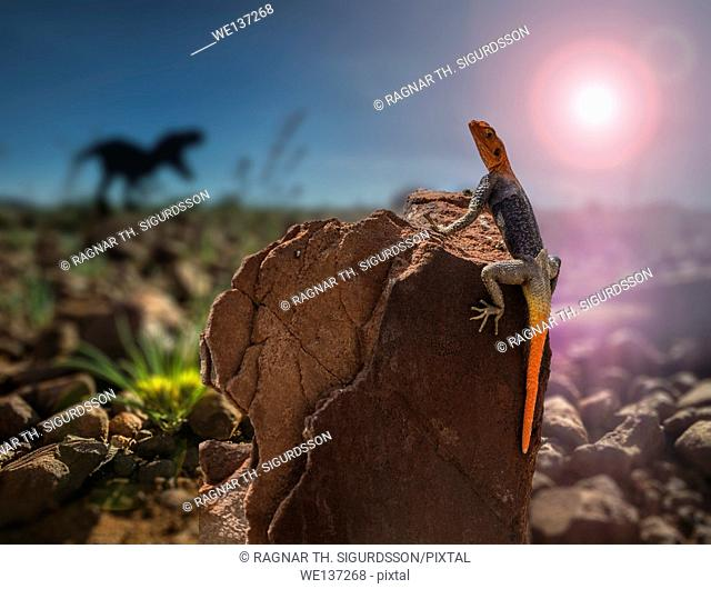 Red-headed rock agama lizard and silhouette of a T-Rex, Namiba, Africa. Digital composite