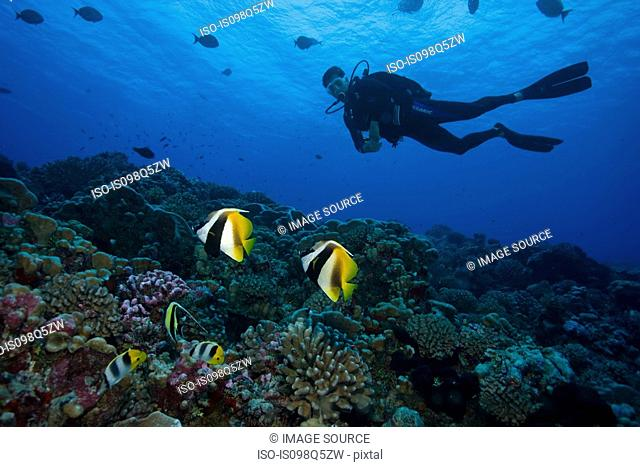 Diver drifts along coral reef