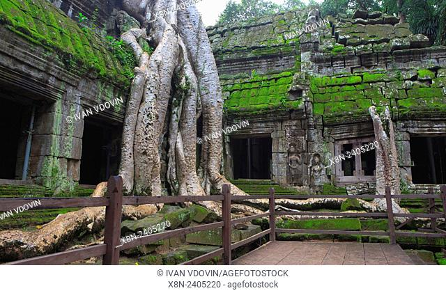 Roots of spung tree over ruins of Ta Prohm temple (Rajavihara) (1186), Angkor, Cambodia