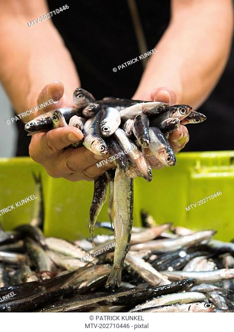 Man holding anchovy fish