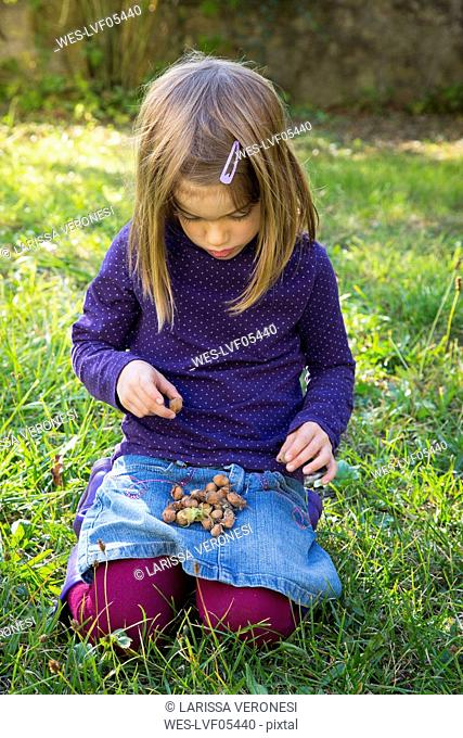 Little girl collecting hazelnuts in her lap