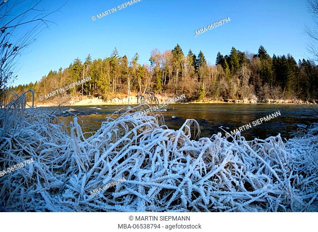 Hoarfrost on grass, Isar, nature reserve Isarauen, near Geretsried, Upper Bavaria, Bavaria Germany