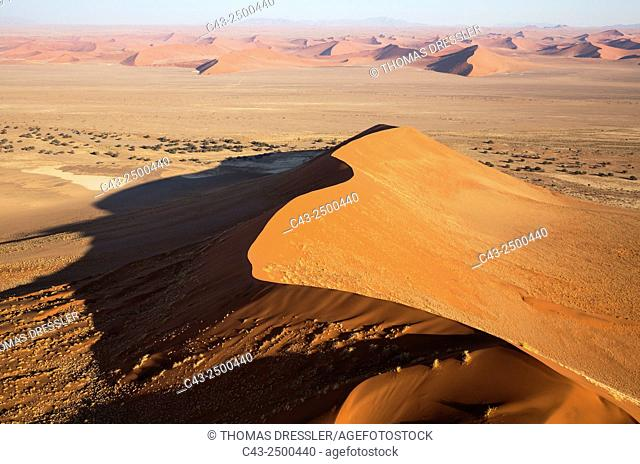 Sand dunes in the Namib Desert. The Camelthorn trees (Acacia erioloba) grow along the dry riverbed of the Tsauchab river. In the evening. Aerial view